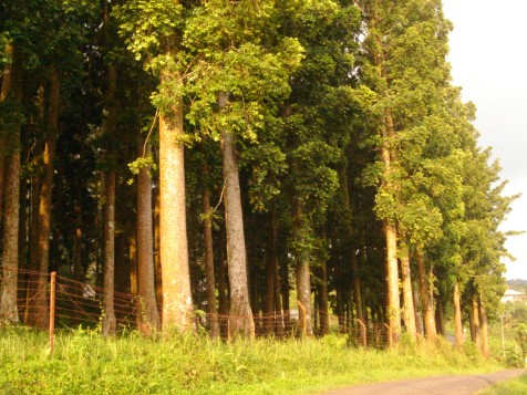 Forest Ecotourism